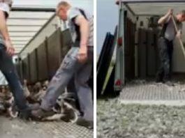 holanda gasea gansos despues de prohibir su caza