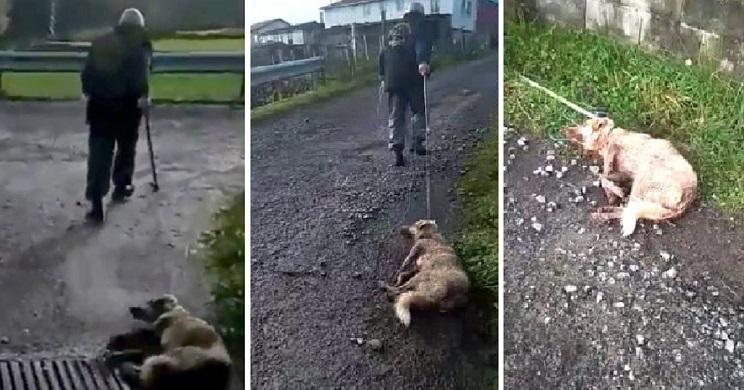 Un individuo dispara y apalea a su perra y los animalistas desatan una oleada de odio contra los cazadores