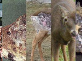 horrorosos ciervos
