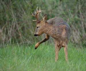 huntspain1