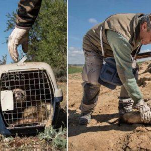 5 trucos del abuelo para sacar a un hurón atrapado en una madriguera de conejos