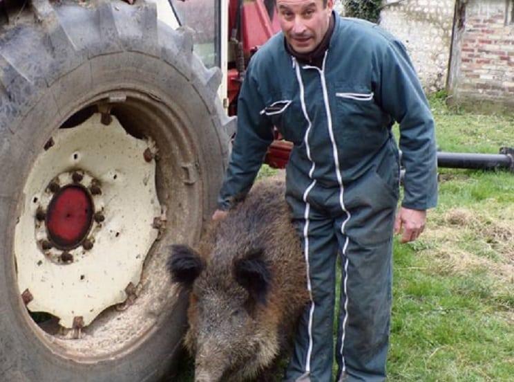 Un cazador moviliza a las redes para salvar a un jabalí del matadero