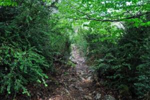 La Custodia del Territorio pretende de concienciar a los ciudadanos de la importancia de mantener los espacios naturales / Foto: aragondigital.es