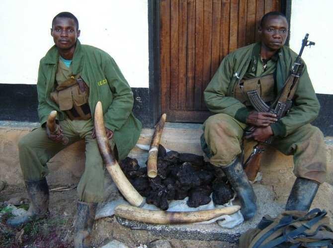Dos vigilantes de la Reserva de Fauna de Okapi custodiando colmillos de elefantes confiscados a cazadores furtivos. (Foto: Okapi Conservation Project)