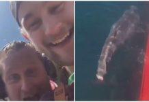 tiburón cola