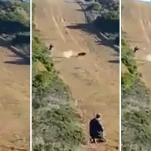 Imprudencia temeraria en una montería: dispara a un jabalí y la bala casi mata a otro cazador