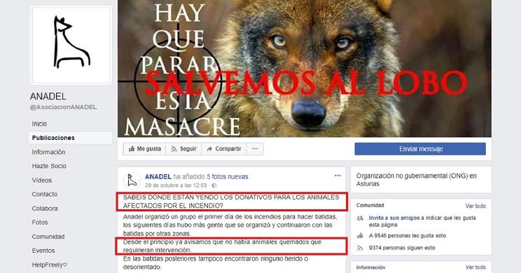 """Denuncian que se desconoce el destino de los donativos """"para animales"""" del incendio de Galicia"""