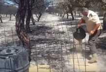 incendio doñana cazadores alimentan animales.