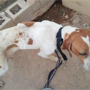 La Federación expulsará al investigado por maltratar a sus perros si se confirma que es cazador