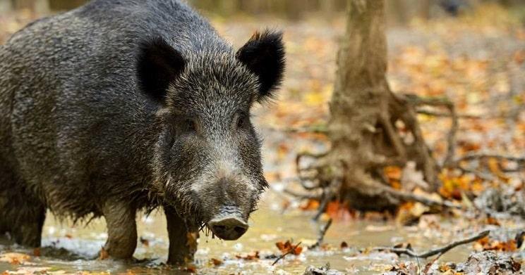 Los cazadores franceses tendrán presencia en una gran Oficina de Biodiversidad