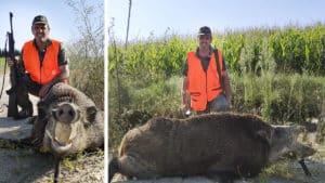 Paga 25 euros por una batida y triunfa cazando este titánico jabalí