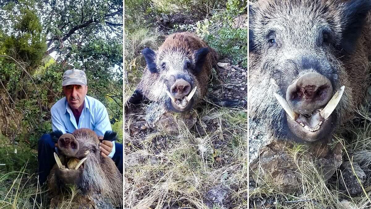 El cazador que sufrió cuatro ictus abate en mano un enorme jabalí de 140 kilos