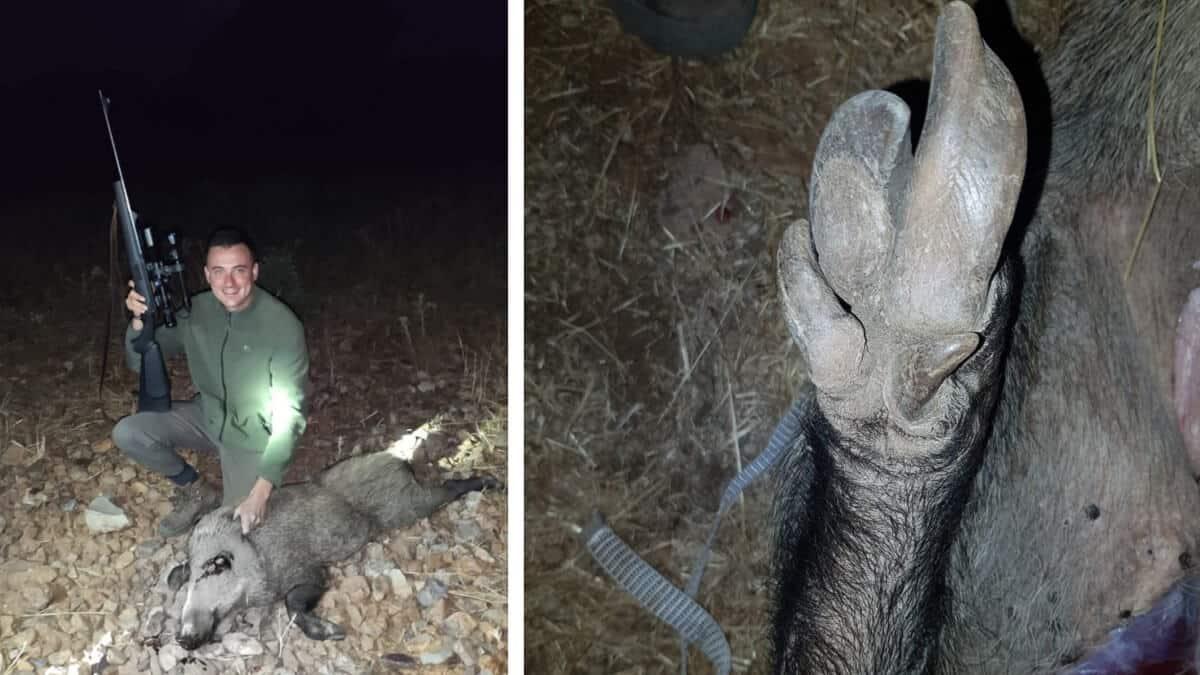 Encuentra una pisada de jabalí muy extraña y cuando lo caza descubre el motivo