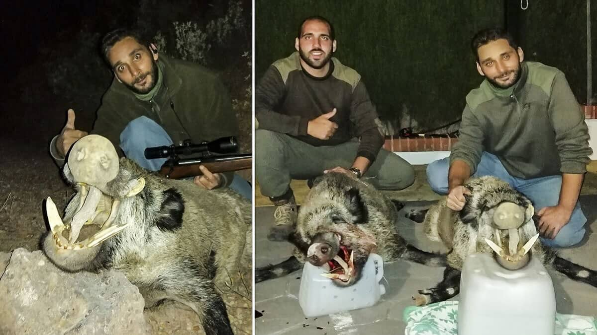 Dos amigos cazan en la misma noche de espera dos enormes jabalíes, uno de 119 puntos