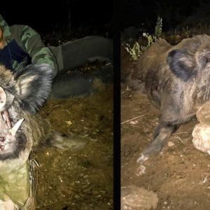 Un agricultor lo llama para cazar al jabalí que le comía las almendras y aparece este monstruo