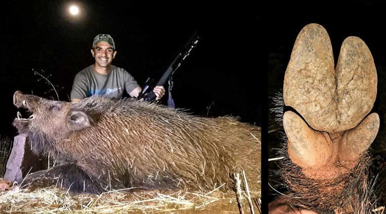 Dos cazadores van de espera y un descomunal jabalí se coloca a sus espaldas sin que ellos se enteren