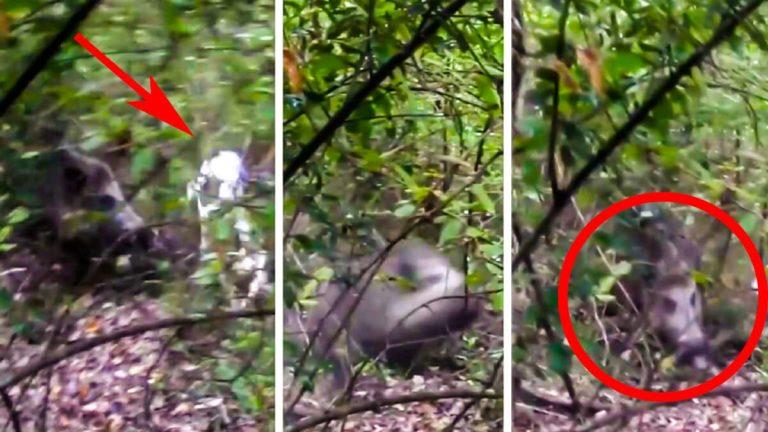Tres capturas del vídeo en el que el jabalí ataca a la perra. @Instagram