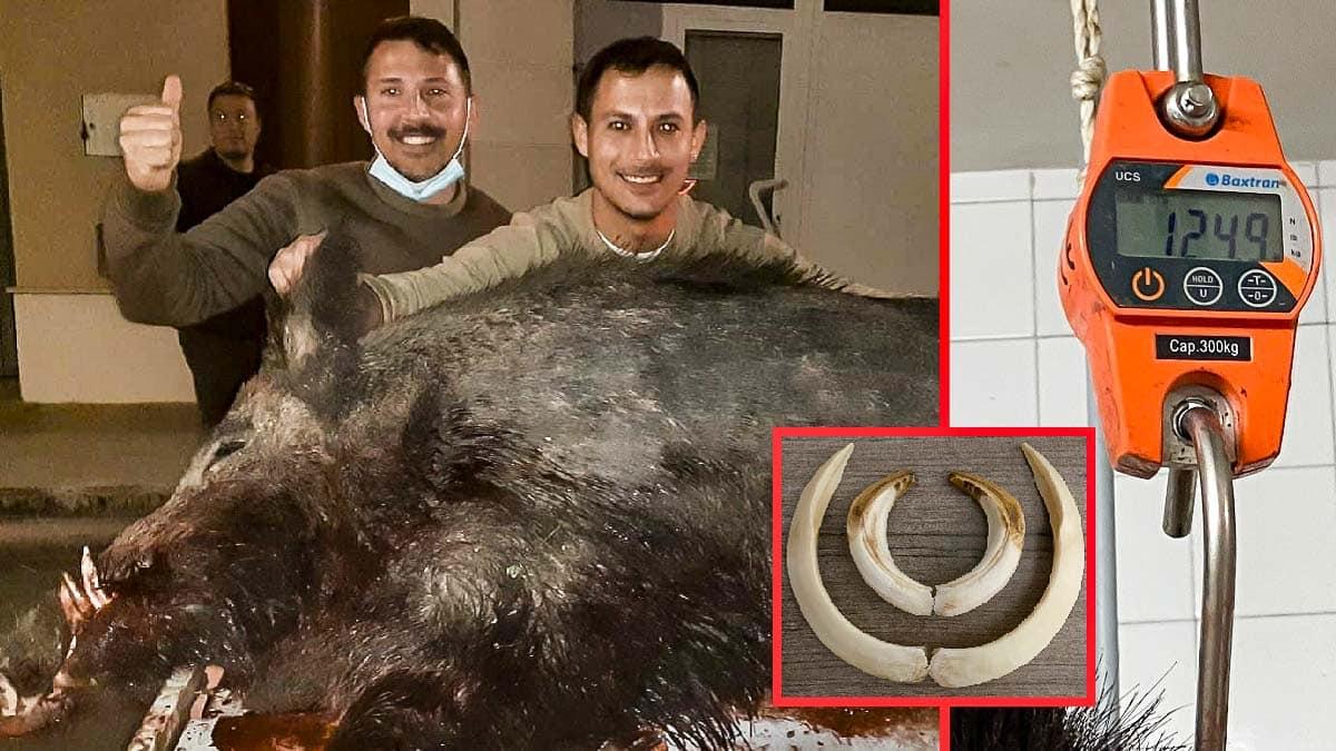 Sigue el rastro de un gran jabalí y consigue cazar este monstruo de 125 kilos en Valencia