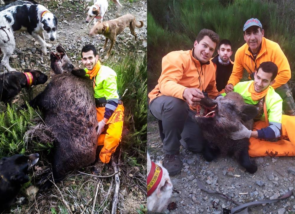 Otras imágenes del descomunal jabalí junto a los cazadores. © P. R.