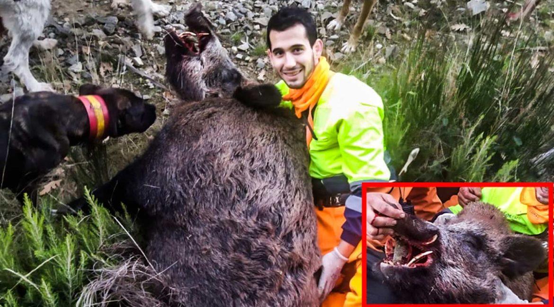Cazan en Burgos un descomunal jabalí de más de 150 kilos: «No podíamos moverlo»