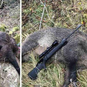 Cazan un jabalí con un colmillo de más de 23 centímetros en el Pirineo Aragonés