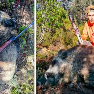 Caza este descomunal jabalí de 120 kilos en un fulminante lance con una bala JG de escopeta
