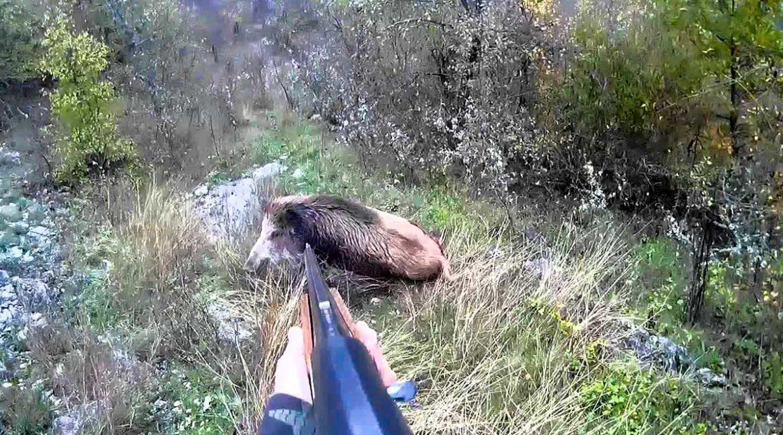 Cuatro lances extremos que demuestran que la caza del jabalí no es ningún juego