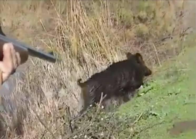 La reacción de este cazador ha hecho que muchos otros se lleven las manos a la cabeza