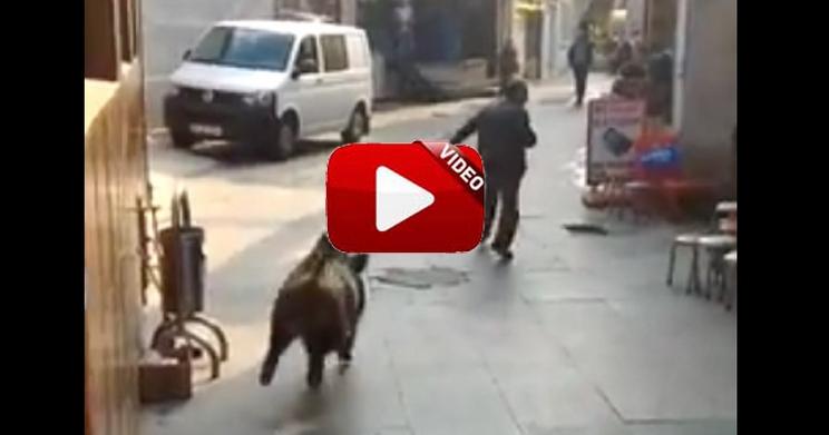 Un jabalí se cuela en el centro de Estambul y siembra el pánico