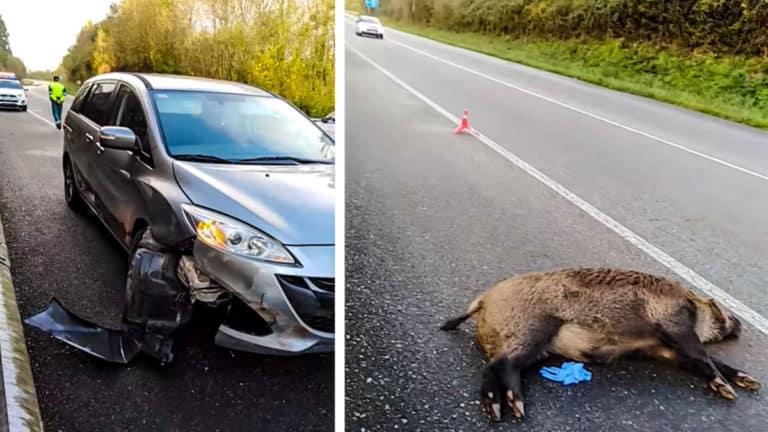 El jabalí yace en la carretera tras el accidente. © Facebook