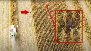 Un gran jabalí juega al juego del gato y el ratón con este agricultor