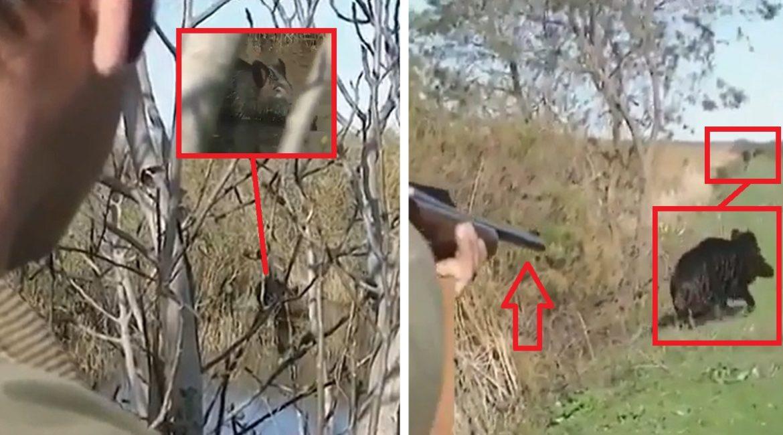Un jabalí se refugia en el agua, le sale a huevo a un cazador y pasa lo que nadie esperaba