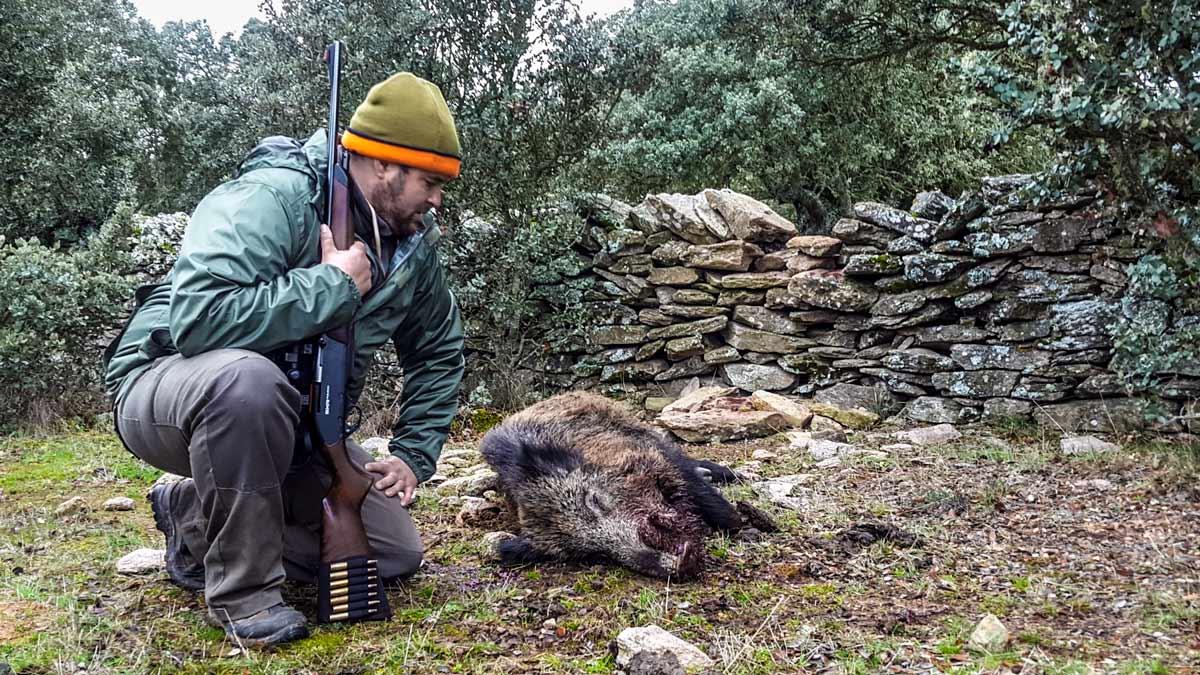 El jabalí se podrá cazar al salto en Extremadura a partir de la próxima temporada