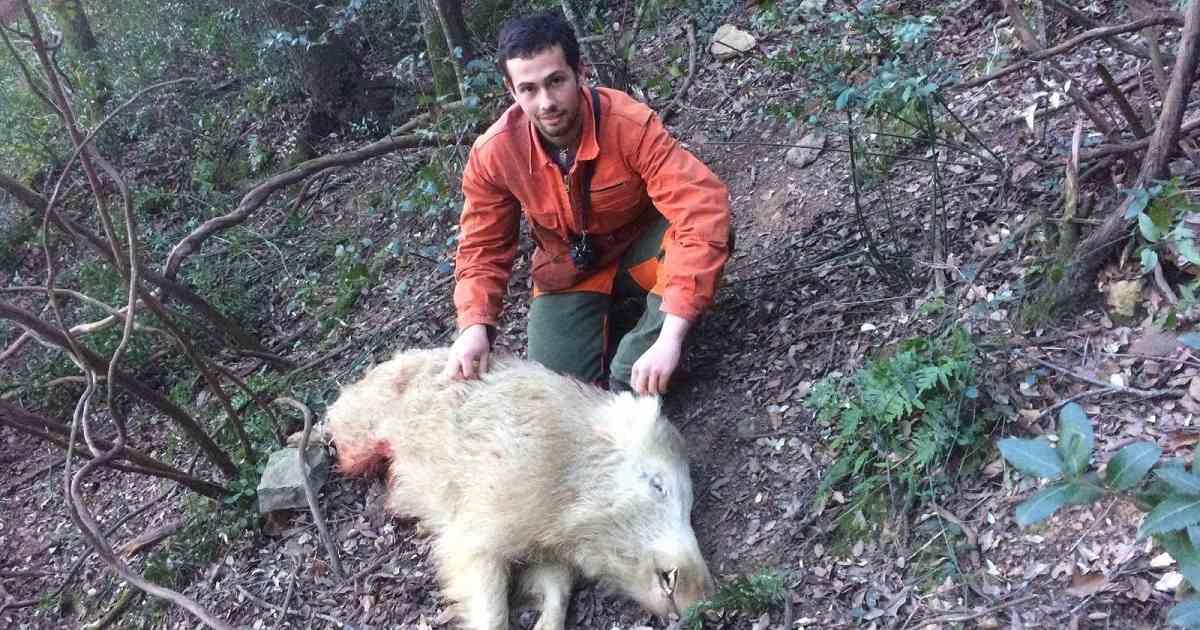 Cazan un jabalí totalmente blanco en Cataluña