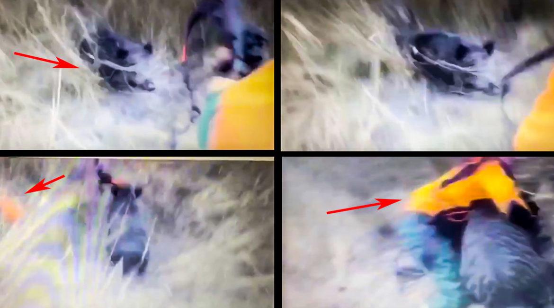 Un gran jabalí ataca a un cazador, lo desarma y se enfrenta cuerpo a cuerpo con él