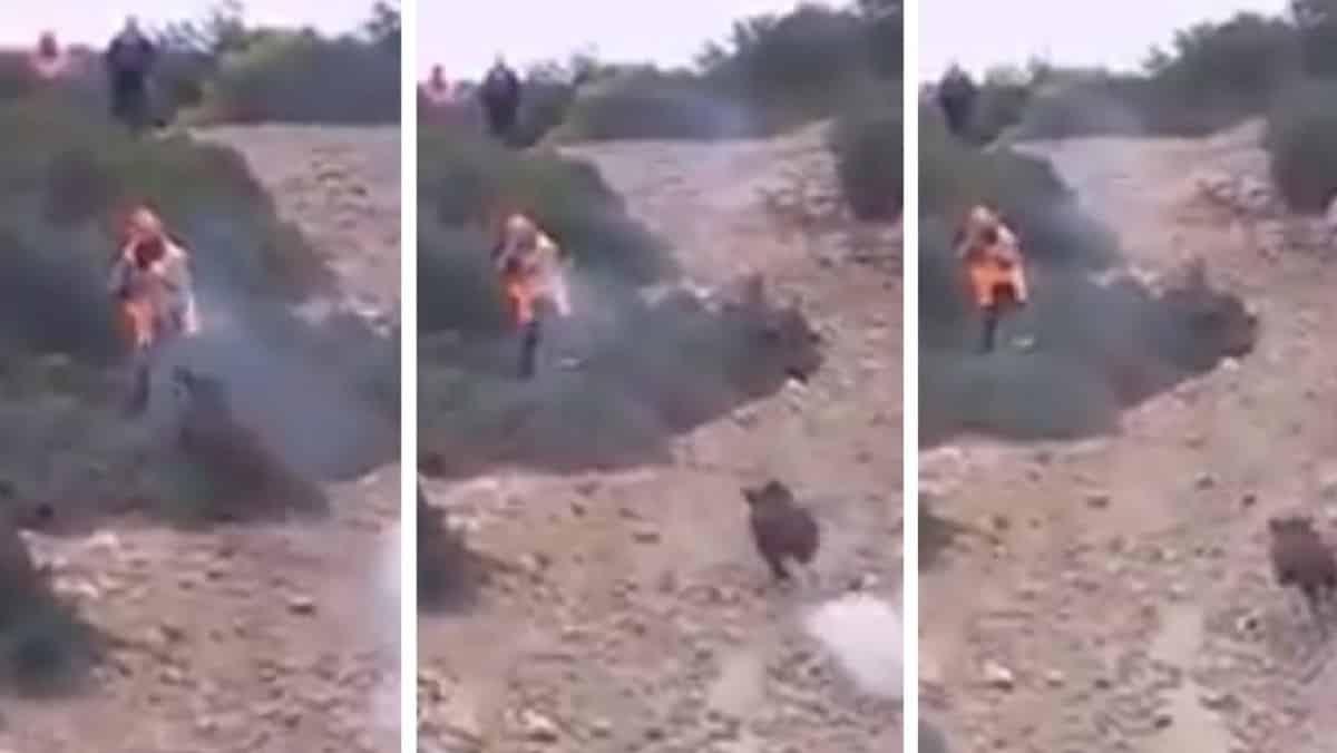 Un cazador dispara y falla en dos ocasiones a un jabalí que corre a por él