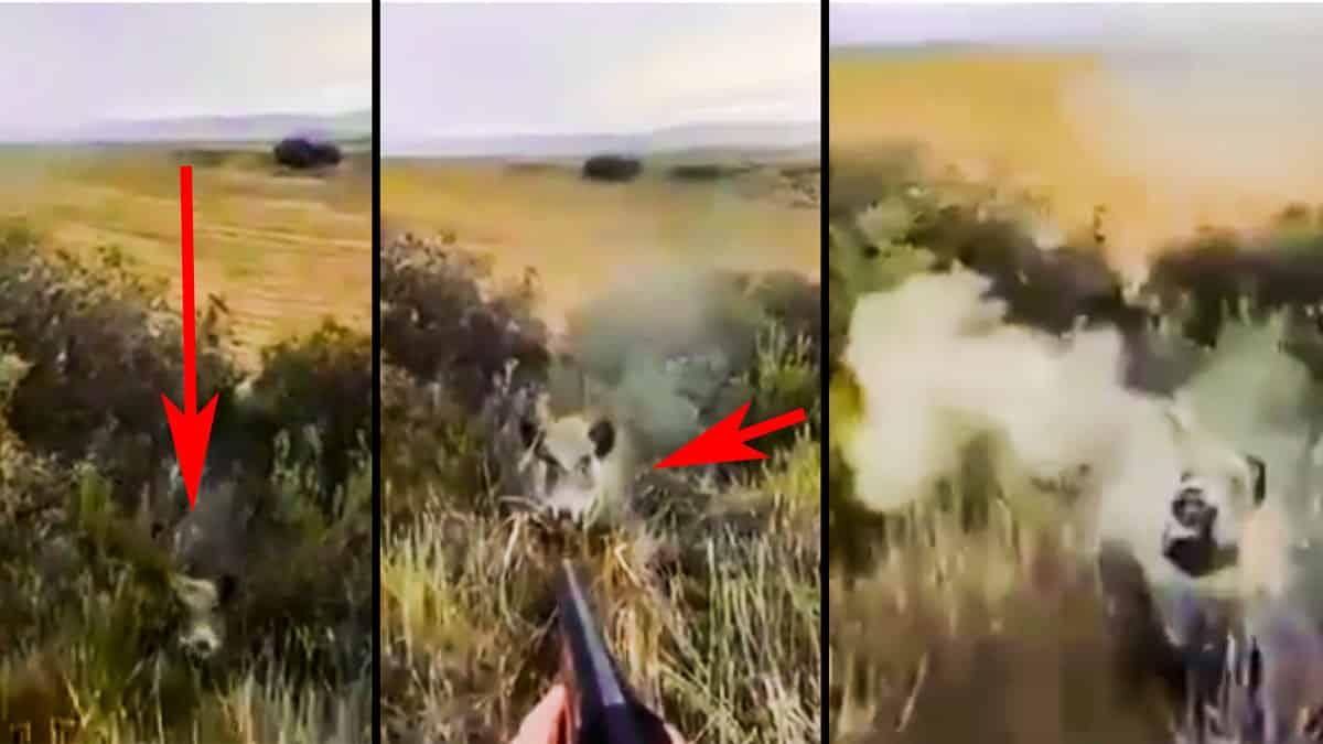 Un cazador graba a cámara lenta cómo un jabalí le ataca por sorpresa en Zaragoza