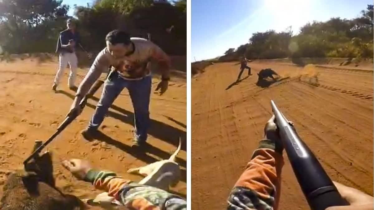 Un jabalí herido ataca a un hombre y su compañero abre fuego