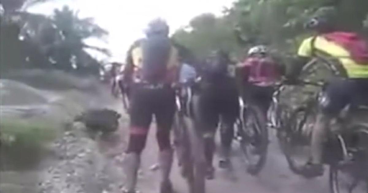 Un jabalí embiste a un grupo de ciclistas en un coto de caza