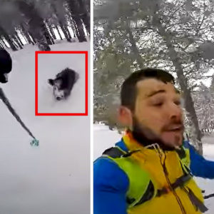 Un jabalí ataca a un esquiador que escapa por los pelos