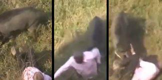 jabali ataca hombre