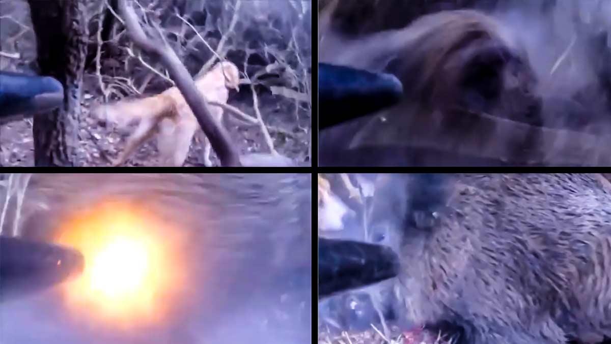 Un jabalí le ataca por sorpresa y dispara a quemarropa en décimas de segundo