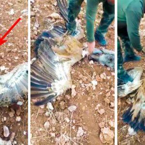 Dos cazadores rescatan a un buitre con la cabeza atrapada en la boca de un jabalí