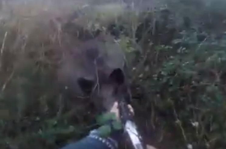 Un jabalí carga contra este cazador y lo pone patas arriba