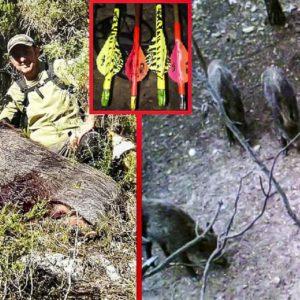 Graba el increíble momento en el que por fin caza con arco un jabalí que llevaba meses aguardando
