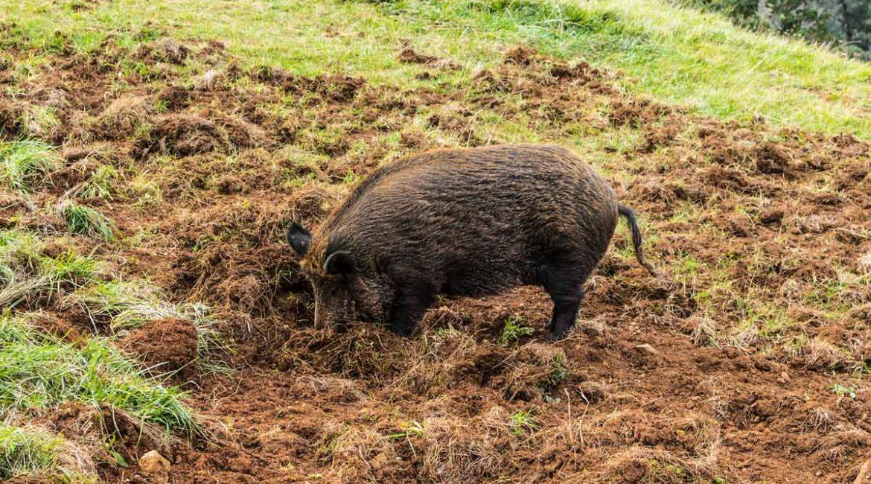 Los agricultores también piden que la caza sea declarada actividad esencial