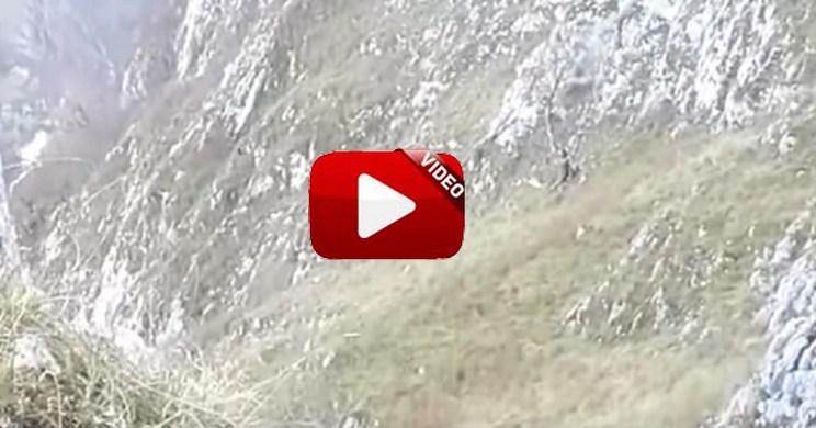 Dispara a un jabalí en batida y el animal se despeña cientos de metros
