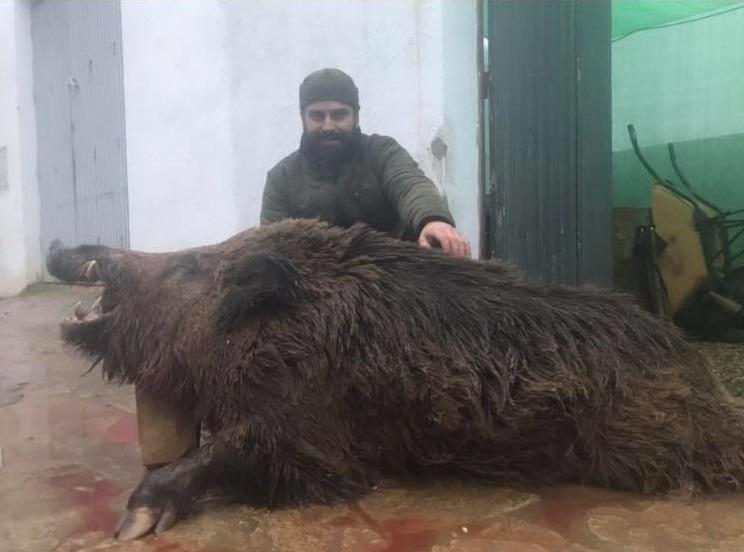 Un cazador abate tras cuatro meses de aguardos un extraordinario jabalí de 125 kilos