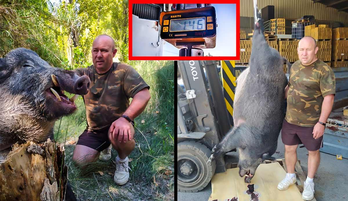 Caza en Murcia uno de los jabalíes más grandes de 2020: casi 150 kilos