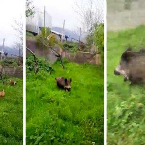 Tres perros buscan un conejo en un huerto y ¡mira lo que encuentran!